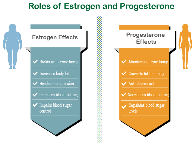 effects of estrogen and progesterone