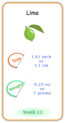 Baby Size and Weight Flashcard week 11