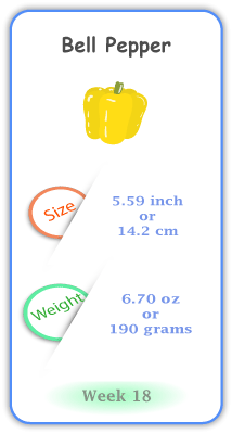 Baby Size and Weight Flashcard week 18