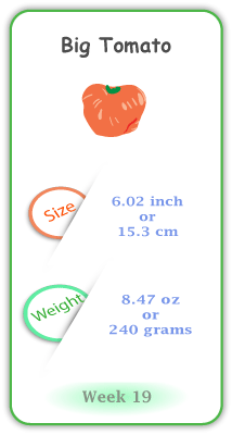 Baby Size and Weight Flashcard week 19