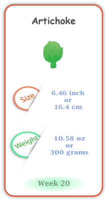 Baby Size and Weight Flashcard week 20