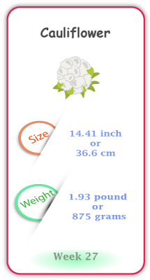 Baby Size and Weight Flashcard week 27