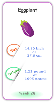 Baby Size and Weight Flashcard week 28