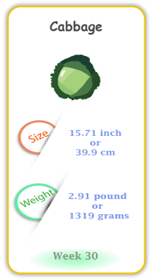 Baby Size and Weight Flashcard week 30