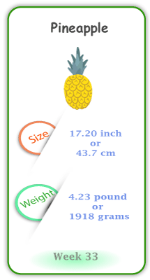 Baby Size and Weight Flashcard week 33