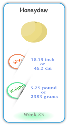 Baby Size and Weight Flashcard week 35