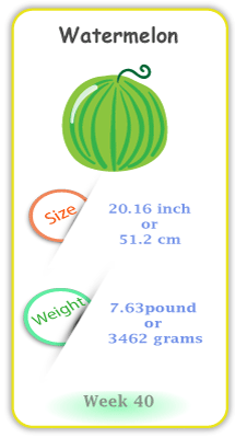 Baby Size and Weight Flashcard week 40