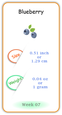 Baby Size and Weight Flashcard week 7