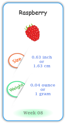 Baby Size and Weight Flashcard week 8