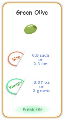 Baby Size and Weight Flashcard week 9